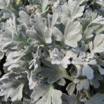 Boughton Silver Brocade Sage