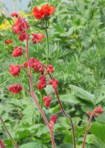 hummingbirds, butterflies, red flowers, beaumont garden centre