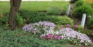 alpine garden, rock garden, beaumont garden centre