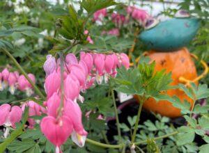 shade flowers, long blooming, grandmas flowers, gardencentre, leduc, beaumont, edmonton, wetaskiwin