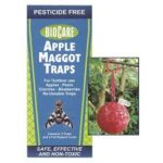 Apple Maggot Traps
